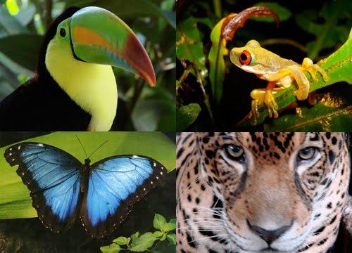 amazon rainforest plants and animals. httpamazonrainforestanimalsfactsblogspotcom amazon rainforest plants and animals 3